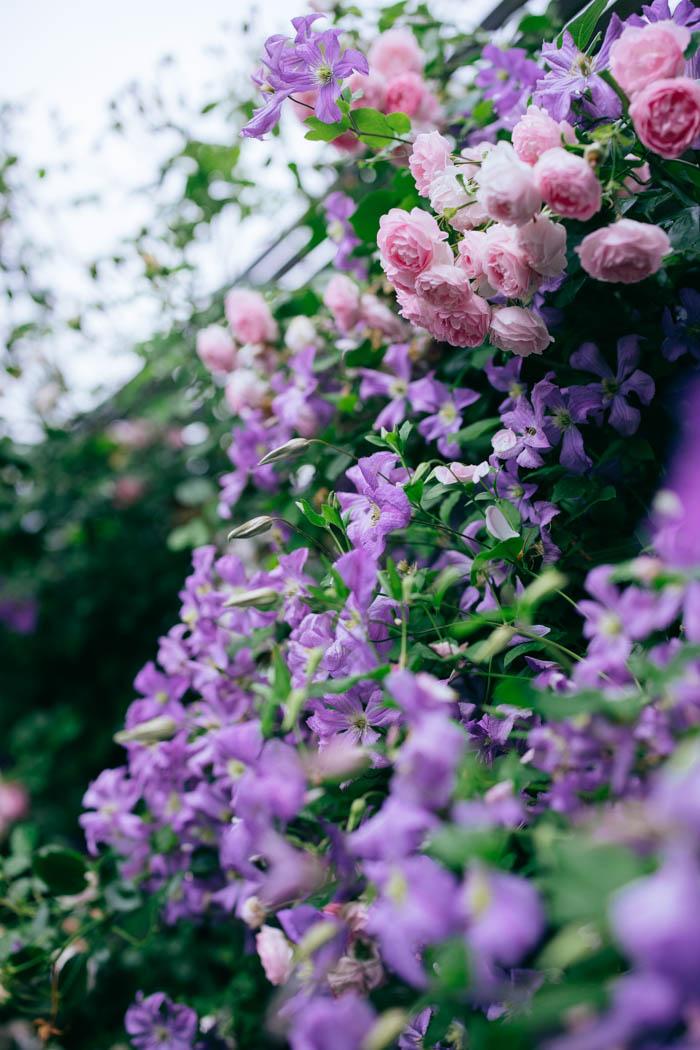 ogrod ogrody rok w ogrodzie-55