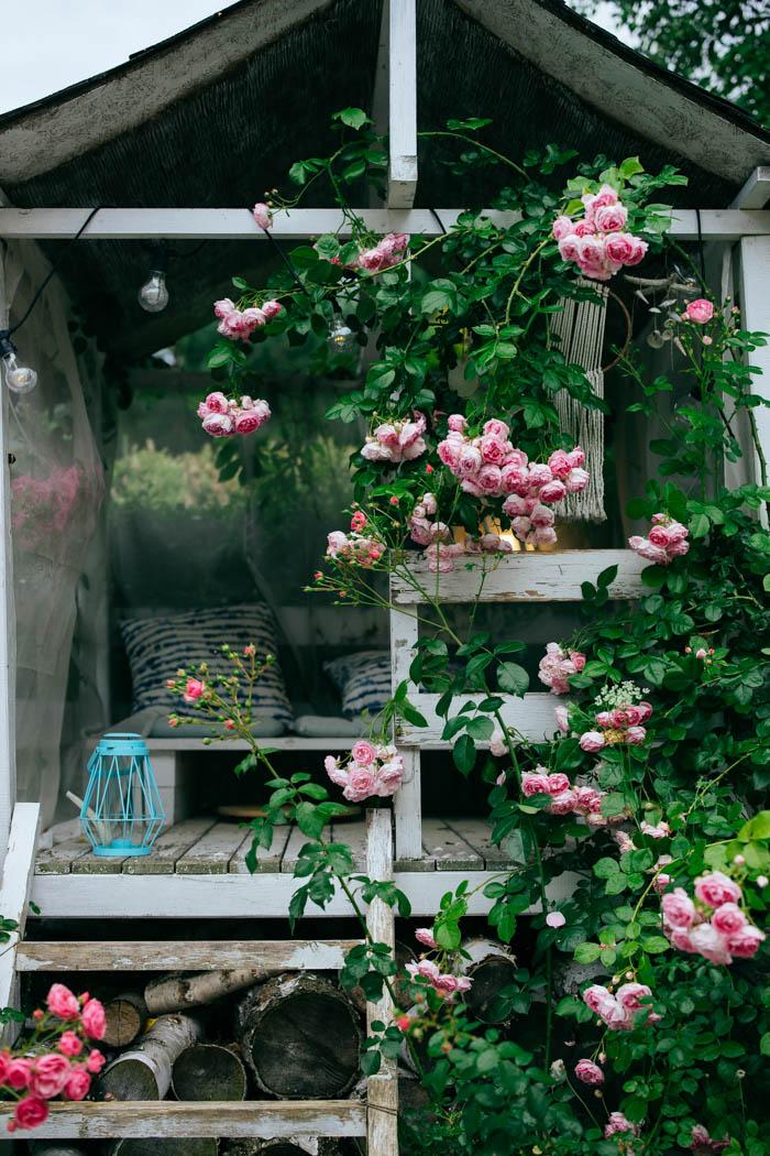 ogrod ogrody rok w ogrodzie-58