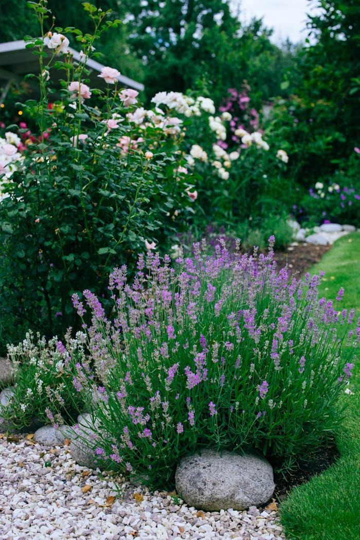ogrod ogrody rok w ogrodzie-62