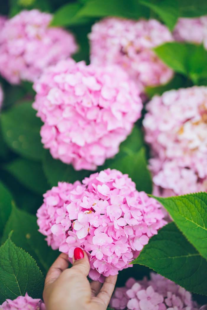 ogrod ogrody rok w ogrodzie-69