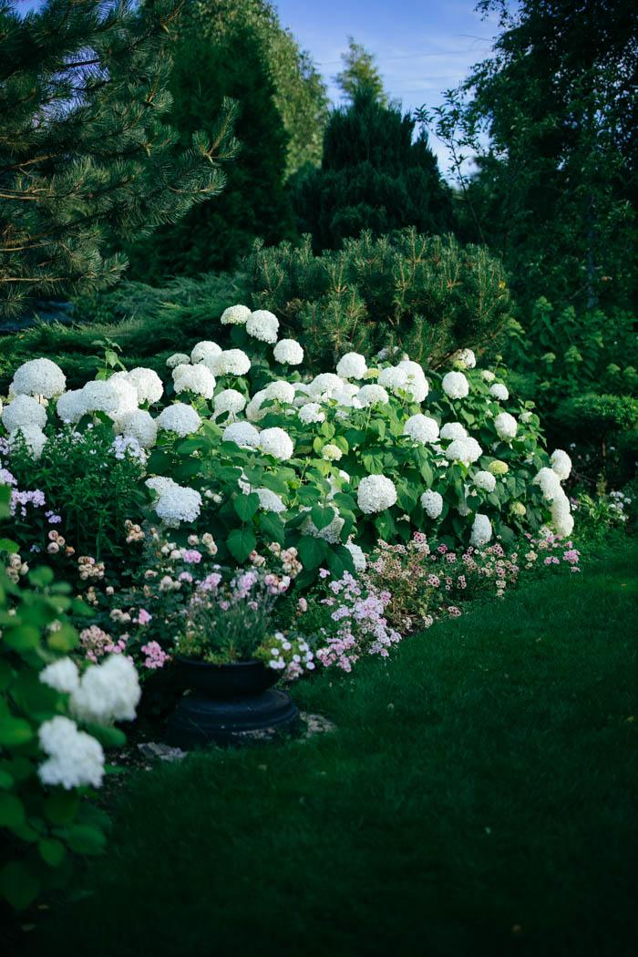 ogrod ogrody rok w ogrodzie-71