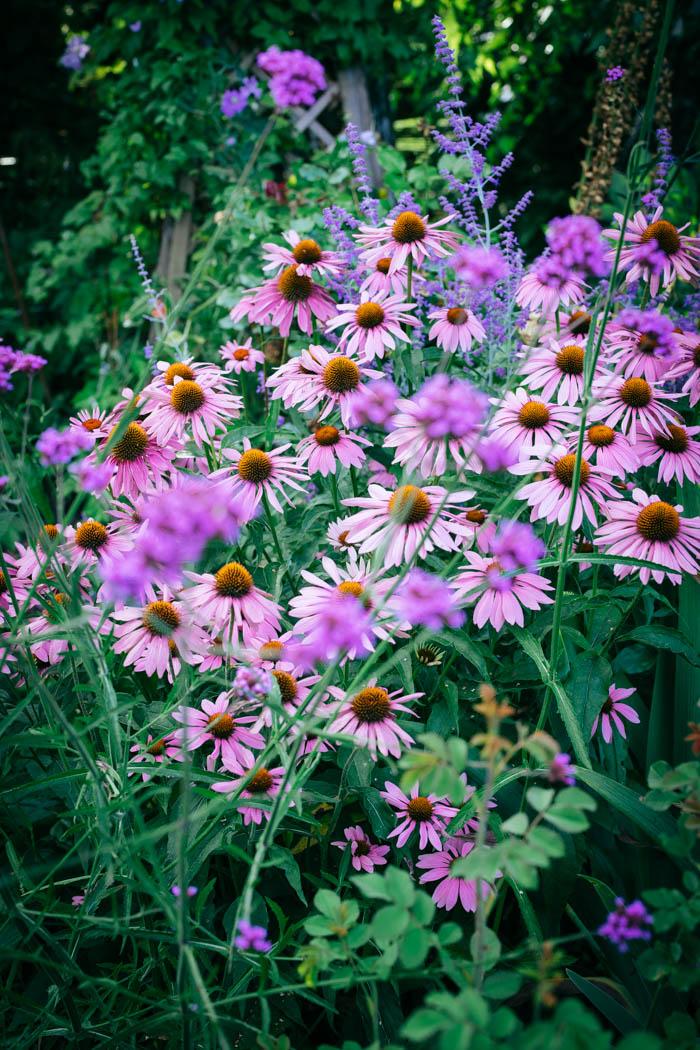 ogrod ogrody rok w ogrodzie-74