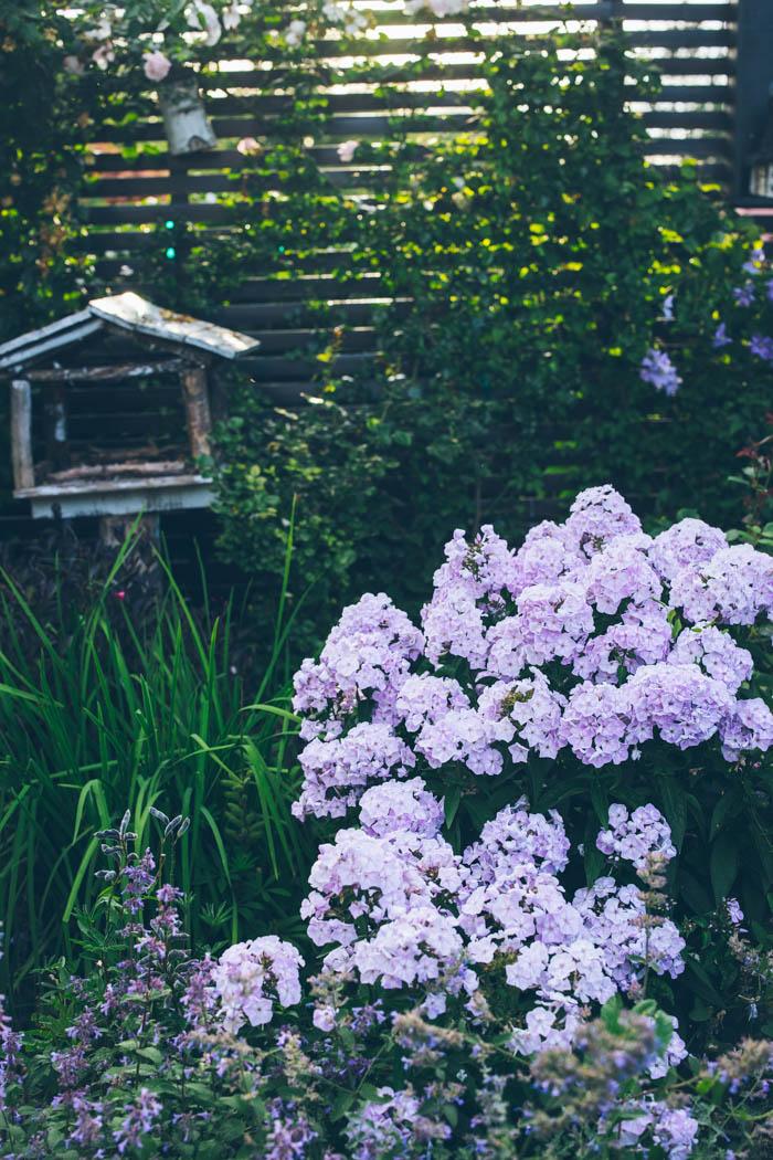 ogrod ogrody rok w ogrodzie-75