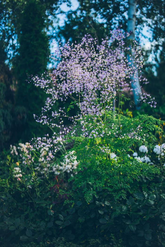 ogrod ogrody rok w ogrodzie-76