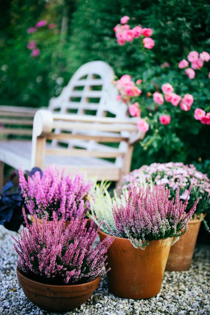 ogrod ogrody rok w ogrodzie-84