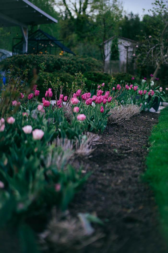 ogrod ogrody rok w ogrodzie-9
